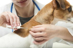 Pet Dog Micro-chipping